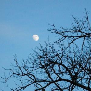 Лунный календарь садовода и огородника с 20 марта по 6 апреля