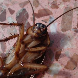 Как вывести тараканов раз и навсегда?