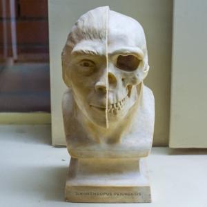 Обнаружен новый подвид древнего человека