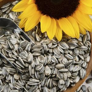 Врачи назвали веские причины для отказа от употребления семечек
