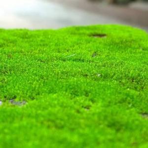 Зеленый мох может быть полезен для здоровья