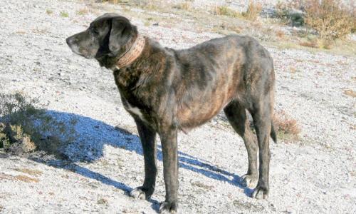 Этот пёс сделал то, что не смогли сделать взрослые: он спас своего хозяина