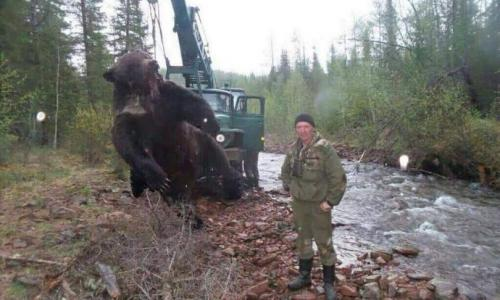 В интернете появились фотографии супер-медведя, охотившегося на людей