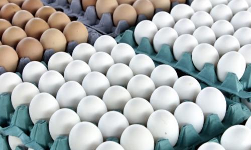 Коричневые яйца сильно отличаются от белых: Вы и не подозревали чем