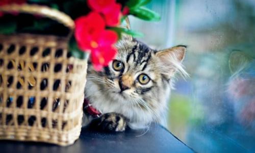 Почему в квартире должен жить кот: Ответ поражает