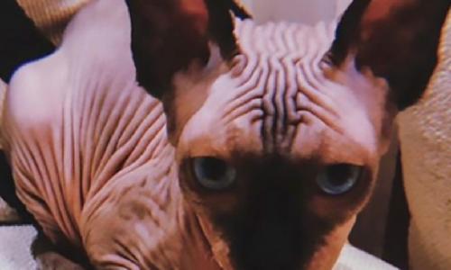 Роналду завел «самого страшного в мире кота»