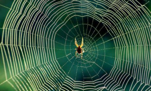 Нужно ли уничтожать пауков в доме?