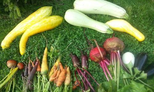 Подбор растений. Чего не стоит делать при покупке семян и саженцев
