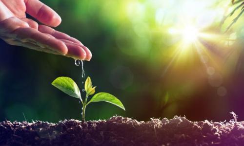 Опыт и соблюдение режима. Как избежать ошибок при создании огорода?