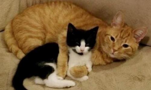 Мужчина спас котенка и намеревался отдать его другим людям, но его кот решил иначе