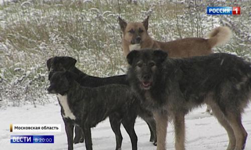 Трагедия под Истрой: собак-людоедов кормили на местном складе
