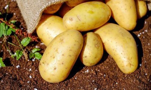 Как картофель влияет на человеческий организм ?