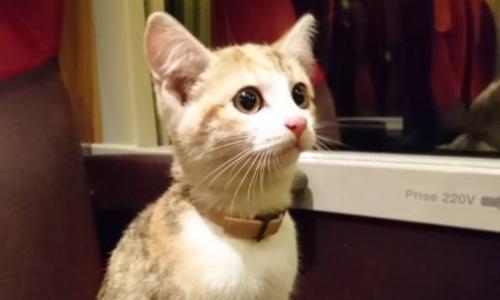 Настырный котенок во Франции вернулся к хозяйке на поезде