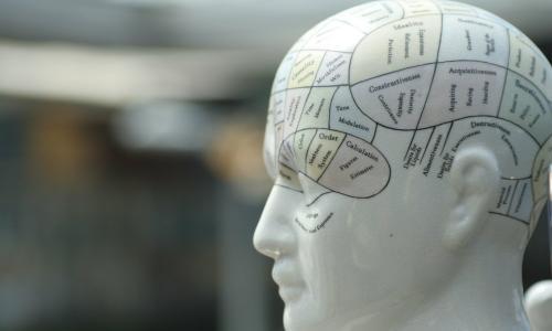 Френология и карты мозга: мифы и реальность