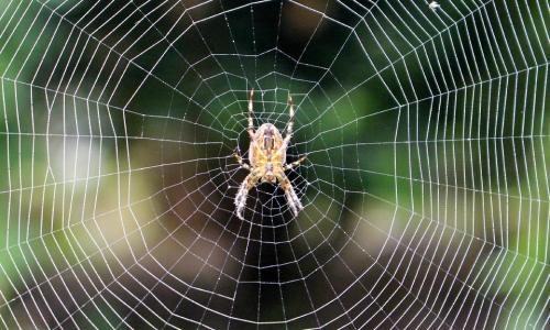 Почему убить паука - примета с очень плохим окончанием?