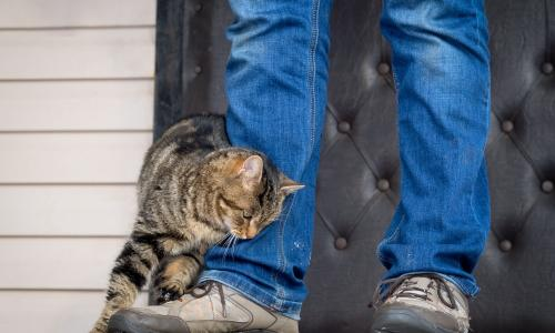 Ни в коем случае не отгоняйте кошку от себя