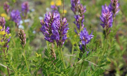 8 растительных средств с мощным противовирусным действием