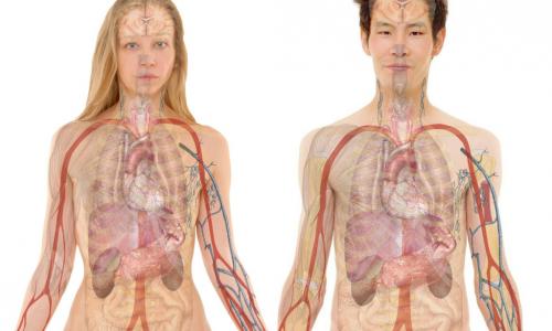 Мифы о человеческом теле, которые давно пора развеять