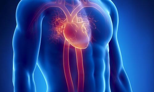 Что может вызвать разрыв сердца у здорового человека