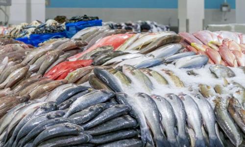 Рыба в искусственных водоемах: почему медики считают ее токсичной