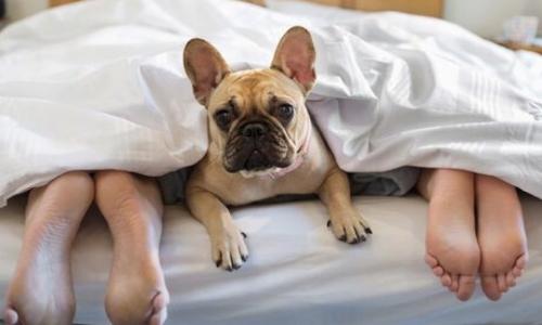 Почему вредно спать с домашними питомцами: мнение ученых