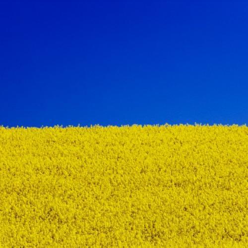 сеятелей флаг украины жовто блакитный фото этой неделе