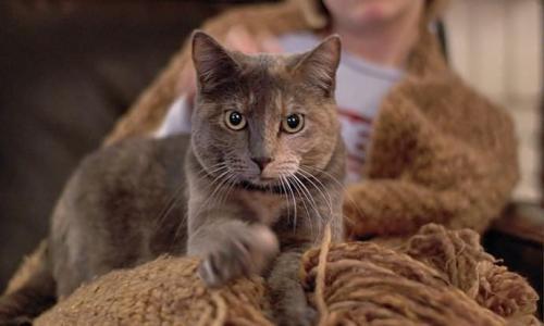 Вот почему кошка топчет вас лапками: это не массаж