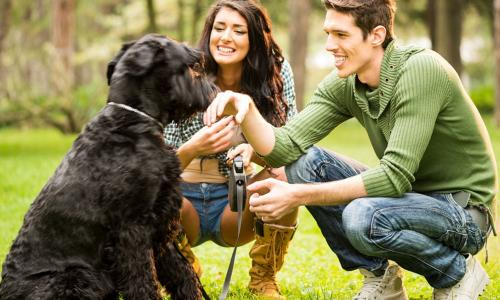 Стало известно, какие клички предпочитают давать своим собакам россияне