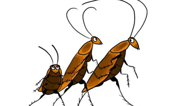 Почему из российских квартир пропали тараканы? Вы удивитесь, узнав причину
