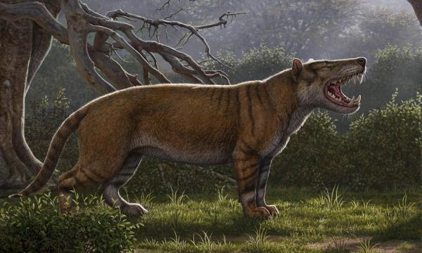 Российские ученые обнаружили останки необычного животного