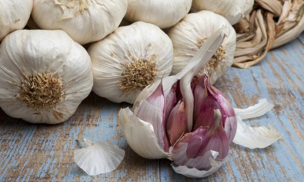 Секреты посадки озимого чеснока: готовимся к большому урожаю
