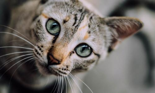 Ученые нашли необычное применение кошкам